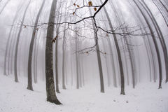 In the forest with fog in winter time, mystic atmosphere.  Stock Photos