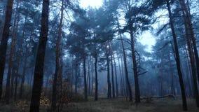 Forest fog wood tree dark magic mist