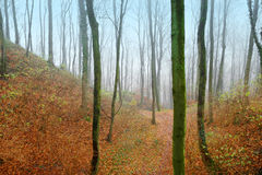 Forest on a foggy day. Forest path on rainy foggy day in autumn Stock Photo