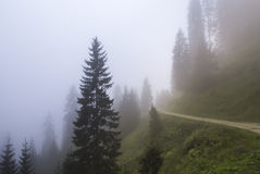 Forest in a foggy day Royalty Free Stock Photos