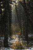 The Forest with foggy and light. Forest with foggy and light Stock Photography