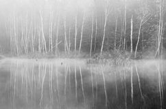 Forest at foggy morning Royalty Free Stock Photography
