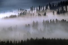 Forest in foggy morning royalty free stock photo