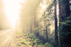 Forest Foggy Road Stock Image