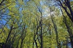 Forest Foliage fotografia stock libera da diritti