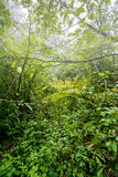 Forest Foliage Stock Photography