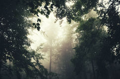 Forest foliage with fog Stock Photography