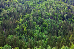 Forest foliage Slovenia Royalty Free Stock Photography