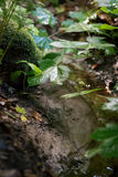 Forest foliage by small stream Royalty Free Stock Image