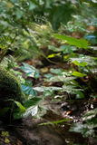 Forest foliage by small stream Stock Photography