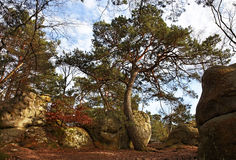 The forest of Fontainebleau. Image from the entrance in the Gorges of Franchard in the forest of Fontainebleau in the early spring.This French forest is a Royalty Free Stock Photo
