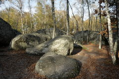 Forest of Fontainebleau. In Seine et marne,Ile-de-france region of France Stock Photography