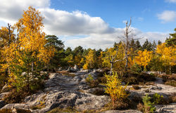 Forest of Fontainebleau. Beautiful autumn landscape in the Fontainebleau forest located in France close to Paris Stock Image