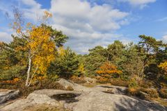 Forest of Fontainebleau. Beautiful autumn landscape in the Fontainebleau forest located in France close to Paris Stock Photo