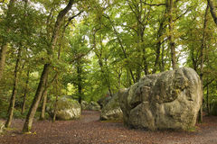 Forest of Fontainebleau. Seine-et-marne, Ile de France, France Royalty Free Stock Photo