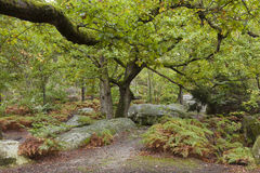 Forest of Fontainebleau Stock Images
