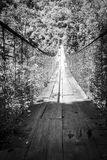 Forest Footbridge Guatemala Black et blanc Images libres de droits