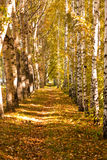 Forest footpath Royalty Free Stock Photos