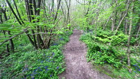 Forest Footpath stock video footage