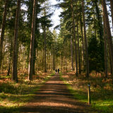 Forest footpath, Brecon Beacons, Wales Stock Photo