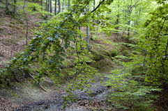 Forest Footpath Stock Image