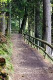 Forest footpath enclosed by a wooden fence Stock Photos