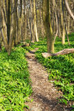 Forest with footpath Stock Photos