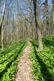 Forest with footpath Royalty Free Stock Images