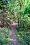 Forest footpath in summer II Royalty Free Stock Image