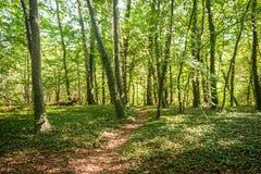 Forest Footpath verde fotos de archivo
