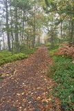 Forest footpath Royalty Free Stock Photo