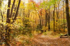 Forest Footpath vuoto in autunno fotografia stock