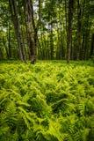 Forest Forest på Roan Mountain Arkivbild