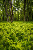 Forest Forest at Roan Mountain Stock Photography