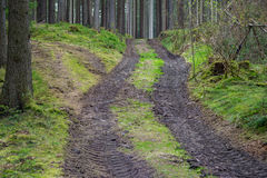 Forest forestry road mud way in green Stock Photography