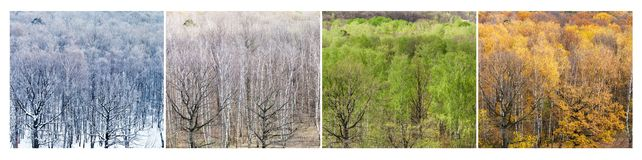 Forest in four divisions of the year stock image