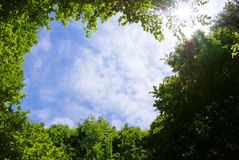 Forest frame. Picture frame made of tree tops surrounding sky and Sun Stock Images