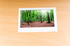 Forest on the   frames Royalty Free Stock Images