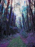 Forest in france . Royalty Free Stock Photography