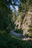 Forest in French alps Stock Photography