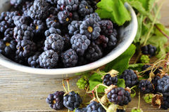 Forest fresh blackberries in a bowl Stock Photography