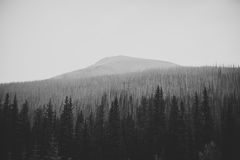 Forest in front of mountains Royalty Free Stock Images