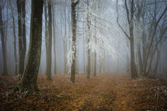 Forest with frost on branches and fog in late autumn Royalty Free Stock Images