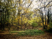Forest at Fruška Gora Stock Image