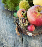 Forest fruit Stock Photography