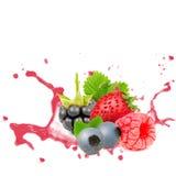 Forest fruit splash Stock Photography