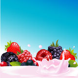 Forest fruit with yogurt splash - vector Stock Image