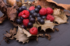 Forest fruits Royalty Free Stock Images