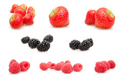 Forest Fruits Stock Photo