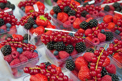 Forest fruits. Assortent of berries in plastic buckets Stock Images